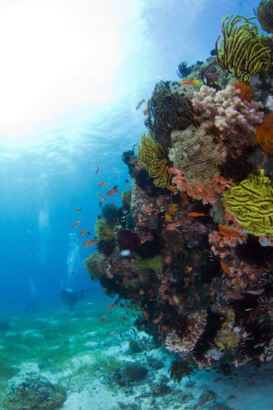 2011.05 パングラオ ダイビング 3日目 ギンガメ特急が行く!