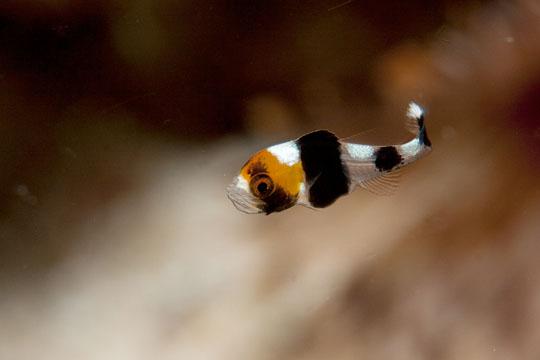 2011.05 パングラオ ダイビング 4日目 アロナはカメラだらけ