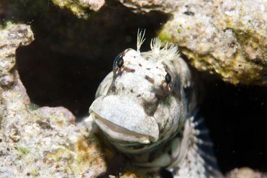 2011.05 パングラオ ダイビング 4日目 アロナ3本目