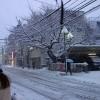 雪国東京からこんばんみー